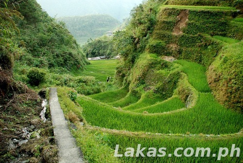 Hungduan Rice Terraces Run
