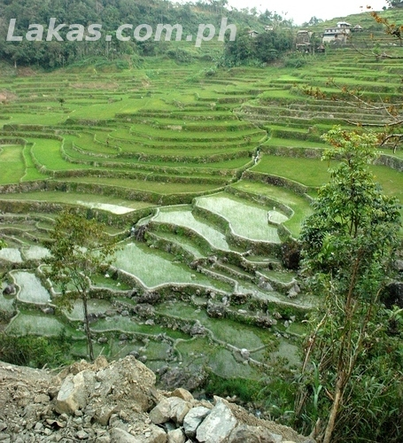 Hungduan Rice Terraces Marathon