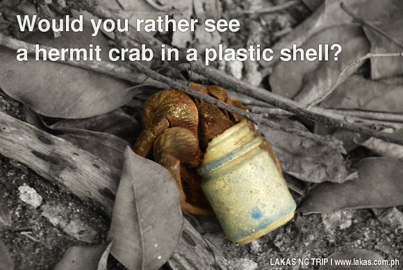 Would You rather see a hermit crab in a plastic shell